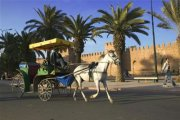 Caleche Ride in Taroudant
