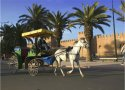 Caleche Rides in Taroudant and Marrakech