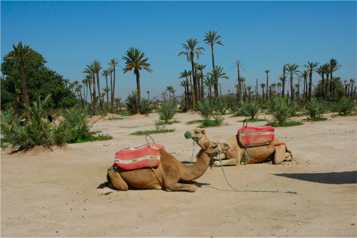 Holidays in Marrakech Surrounds & Palmeraie in a typical